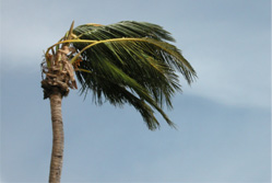 Hurricane Shutters wind speed test of winds up to 150mph